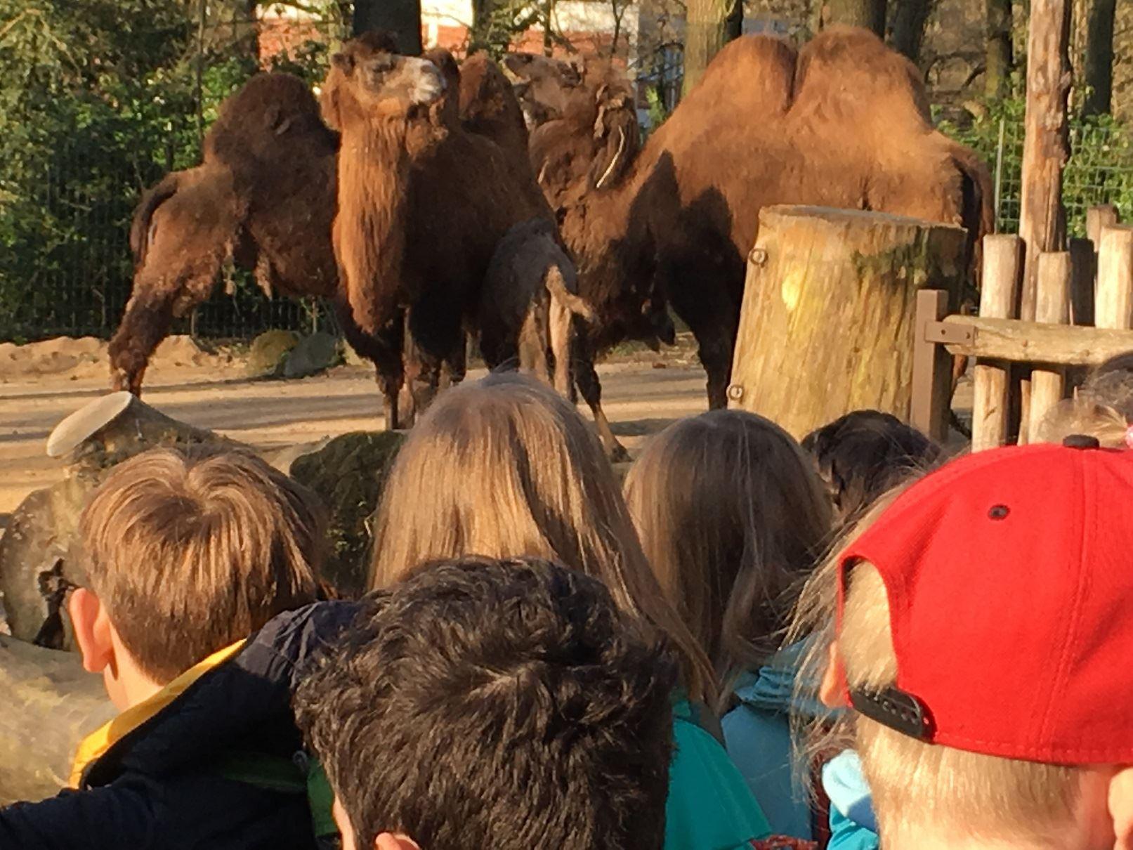 Projekt Zooschule Bild 3