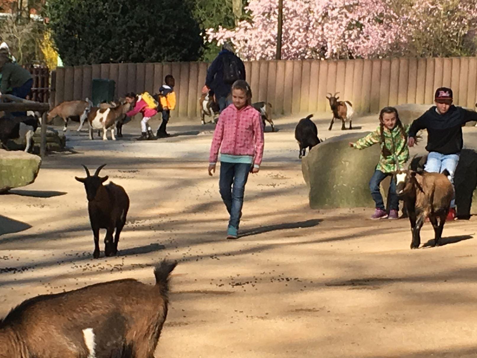 Projekt Zooschule Bild 7
